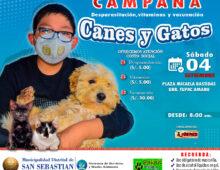 GRAN CAMPAÑA DE CANES Y GATOS